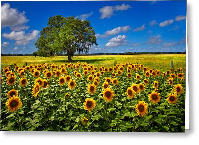 Tree In The Sunflower Field Greeting Card by Debra and Dave Vanderlaan