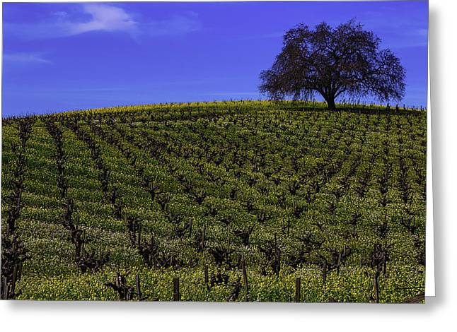 Tree In The Vineyards Greeting Card
