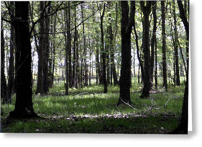 Greeting Card featuring the photograph Tree In The Woods by Michelle Audas