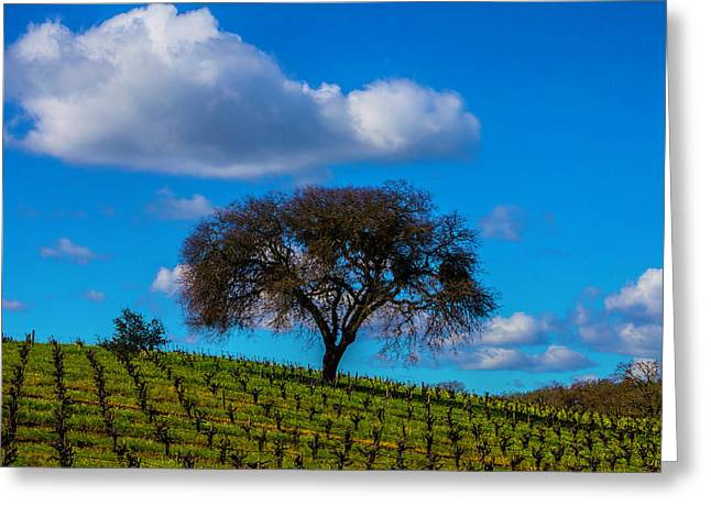 Tree In Vineyard With Clouds Greeting Card