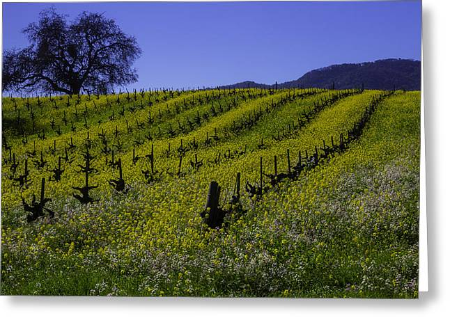 Tree  In Vineyards Greeting Card