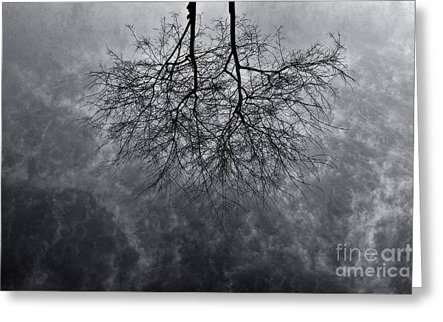 Tree In Water Greeting Card