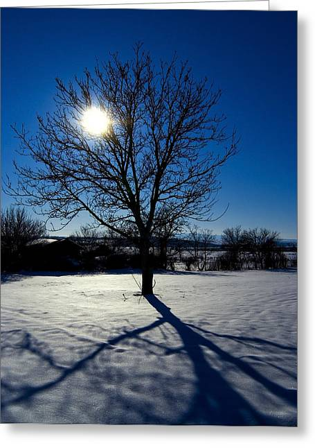 Tree Into Sun On A Winter Snowy Afternoon Greeting Card