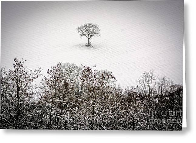 Tree Isolated In Winter. Auvergne. France Greeting Card by Bernard Jaubert