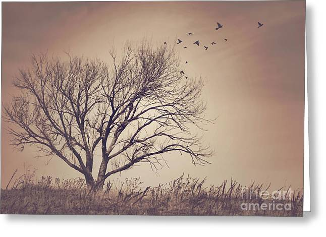 Greeting Card featuring the photograph Tree by Juli Scalzi