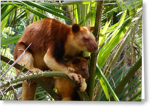 Tree Kangaroo 1 Greeting Card