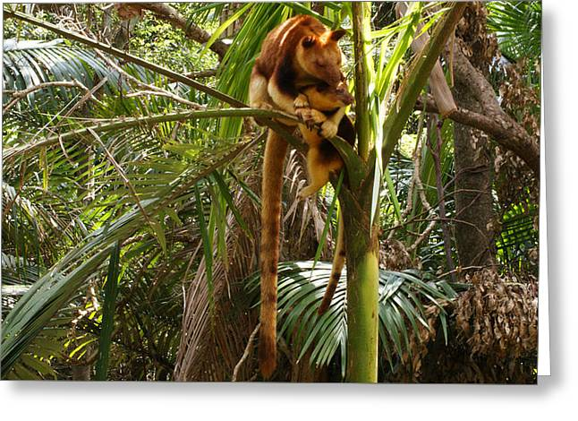 Tree Kangaroo 2 Greeting Card by Gary Crockett