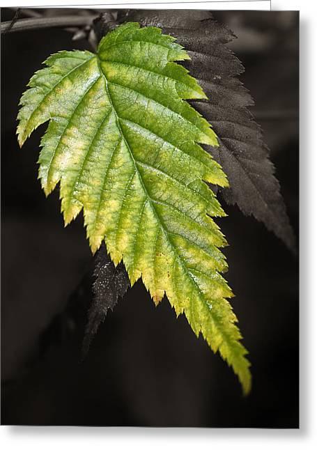 Tree Leaf Study  Greeting Card