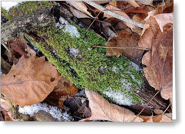 Tree Lichen Greeting Card by Scott Kingery