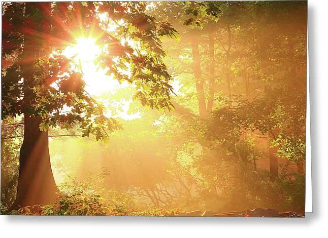 Tree Light-god's Rays Greeting Card