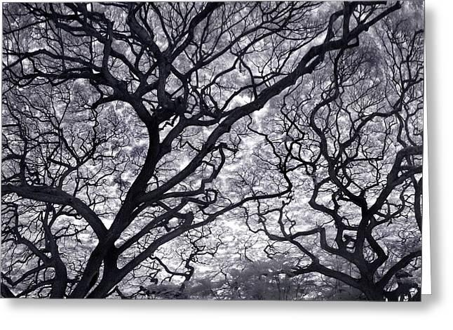 Tree Lightening Greeting Card by Sean Davey