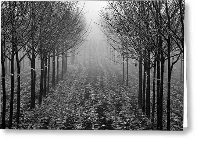 Tree Line Greeting Card by David  Hubbs