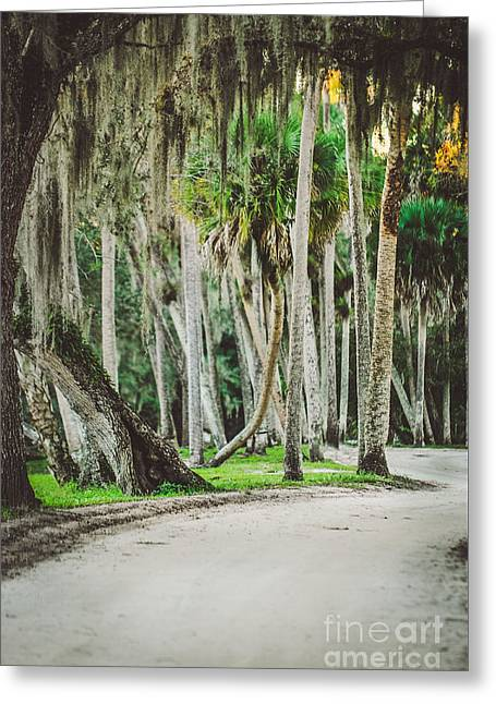 Tree Lined Dirt Road In Vintage Greeting Card