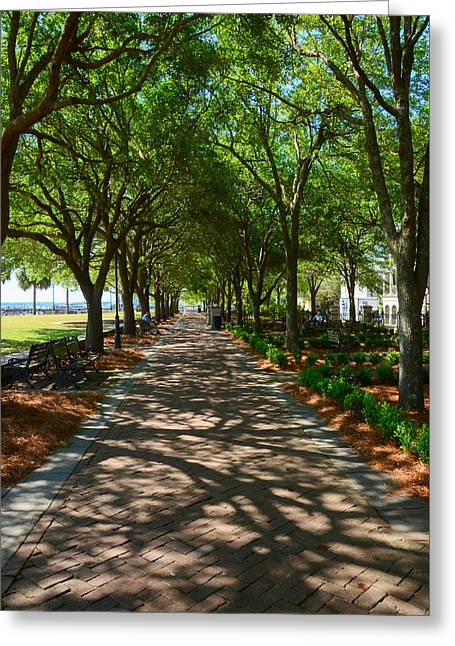 Tree Lined Path Greeting Card