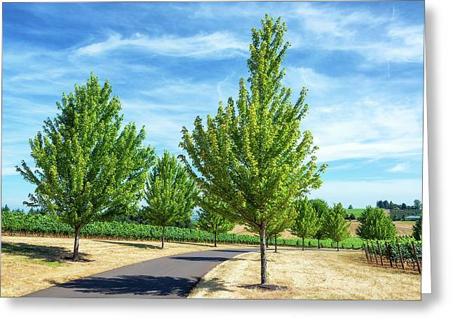 Tree Lined Road And Vineyard Greeting Card