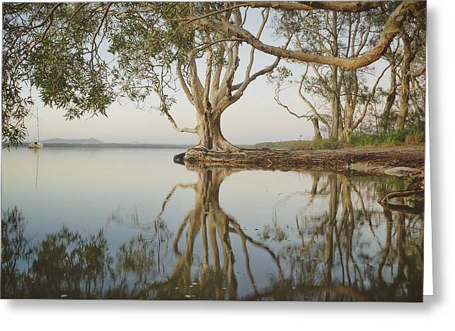 Greeting Card featuring the photograph Tree Love Down By The Lake by Keiran Lusk