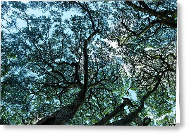 Tree Map Greeting Card by Sean Davey