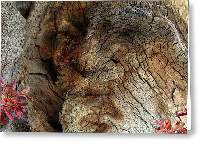 Greeting Card featuring the photograph Tree Memories # 34 by Ed Hall