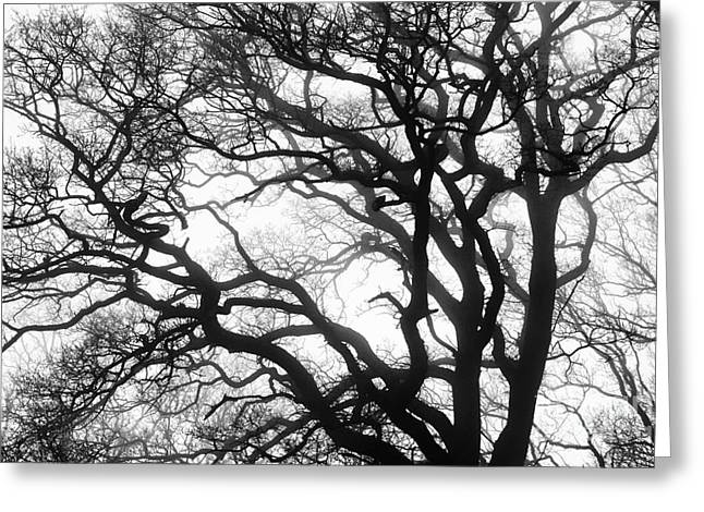 Tree Mist Greeting Card by Tim Gainey