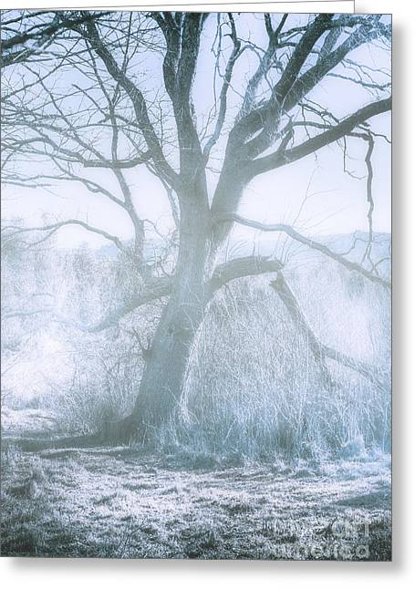 Tree Of Frost Bite Greeting Card by Jorgo Photography - Wall Art Gallery