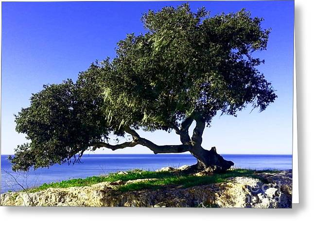 Tree Of Life - 3 Greeting Card by Tap On Photo