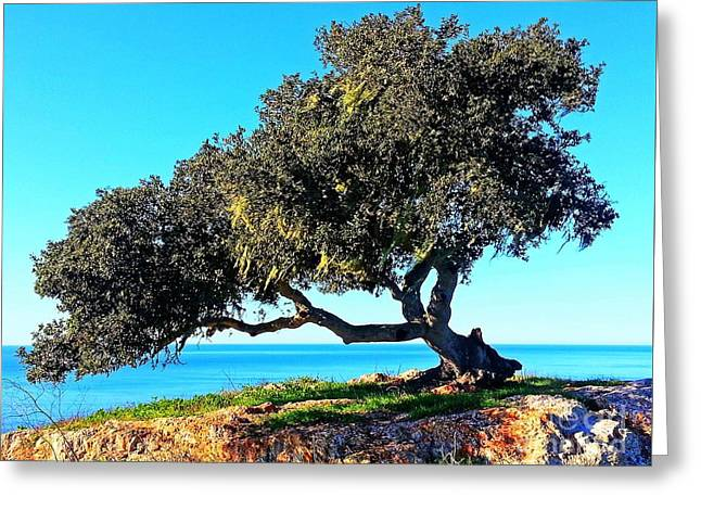 Tree Of Life - 5 Greeting Card by Tap On Photo