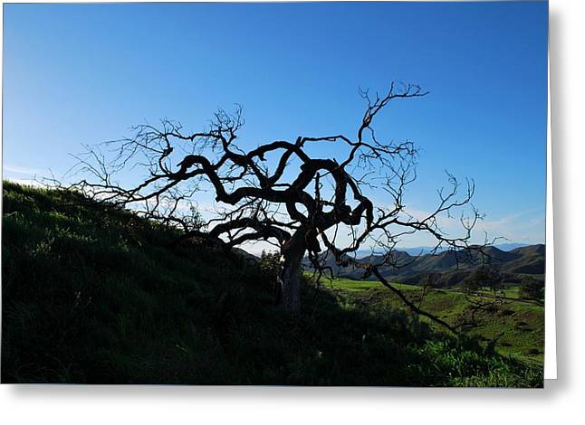 Greeting Card featuring the photograph Tree Of Light - Landscape by Matt Harang