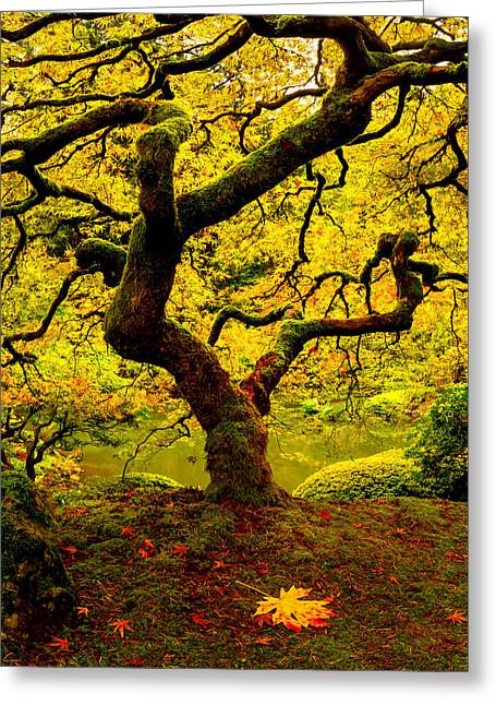 Tree Of Light Panel 2 Greeting Card