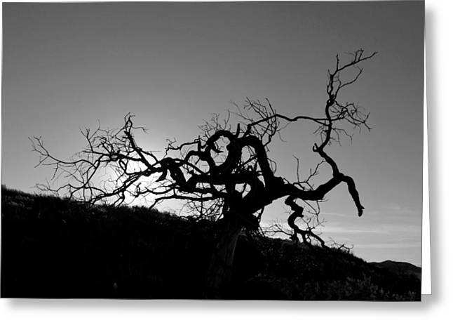Greeting Card featuring the photograph Tree Of Light Silhouette Hillside - Black And White  by Matt Harang