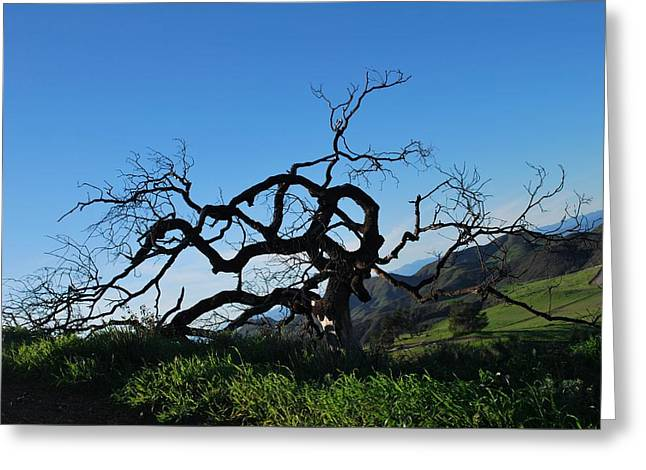 Greeting Card featuring the photograph Tree Of Light - Slanted Horizon by Matt Harang