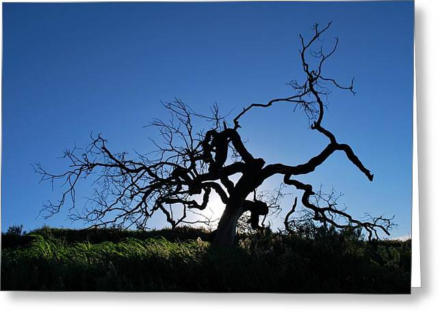 Greeting Card featuring the photograph Tree Of Light - Straight View 2 by Matt Harang