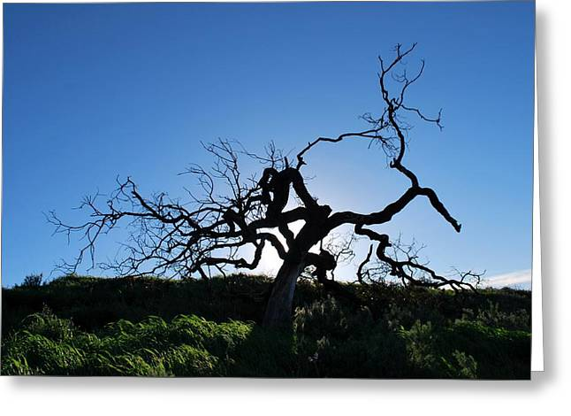 Greeting Card featuring the photograph Tree Of Light - Straight View by Matt Harang