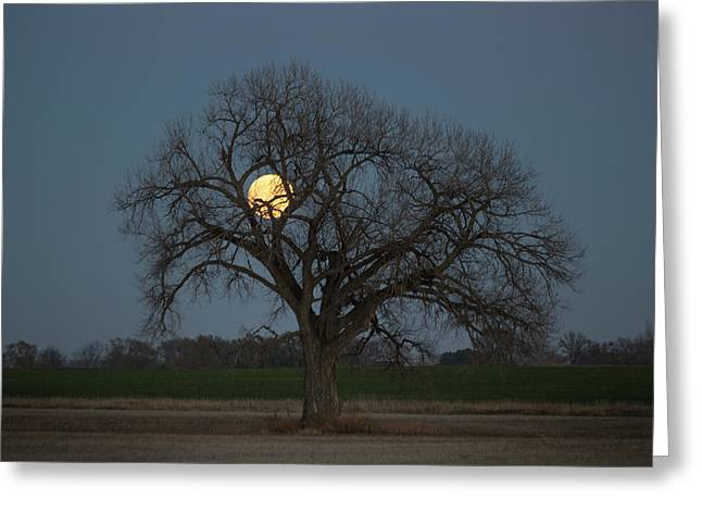 Tree Of Supermoon Greeting Card