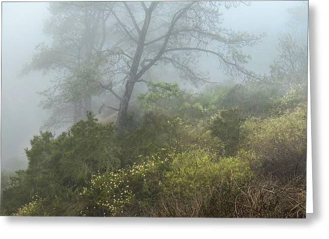 Tree On A Foggy Hill Greeting Card