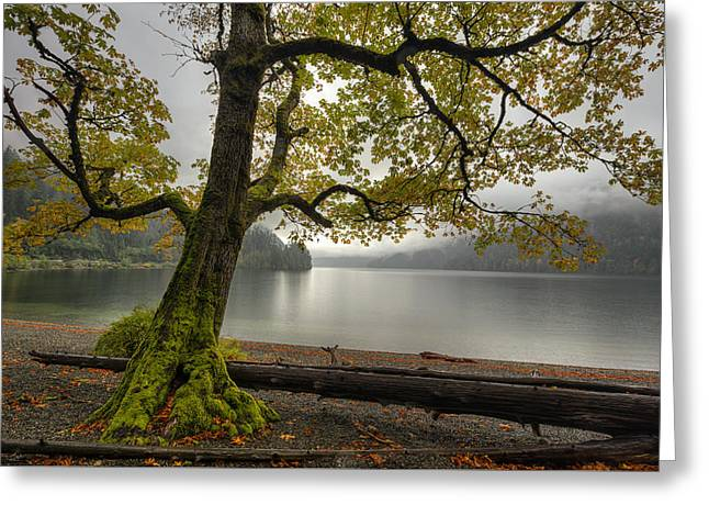 Tree On Cameron Lake Greeting Card by Mark Kiver