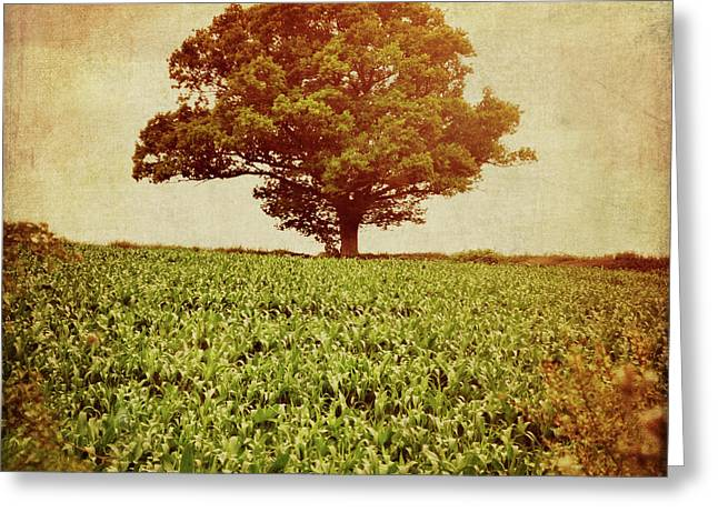 Greeting Card featuring the photograph Tree On Edge Of Field by Lyn Randle