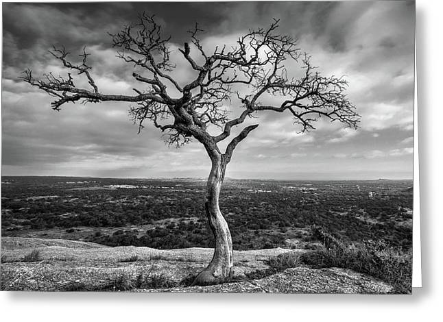 Tree On Enchanted Rock In Black And White Greeting Card
