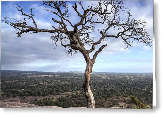 Tree On Enchanted Rock - Square Greeting Card