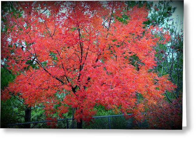Greeting Card featuring the photograph Tree On Fire by AJ Schibig