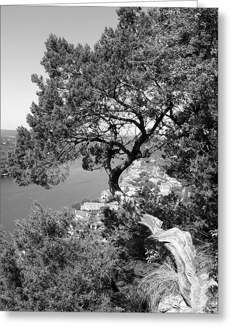 Tree On Mount Bonnell Greeting Card by Lindsey Orlando