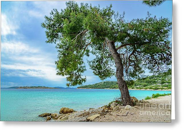 Tree On Northern Dalmatian Coast Beach, Croatia Greeting Card
