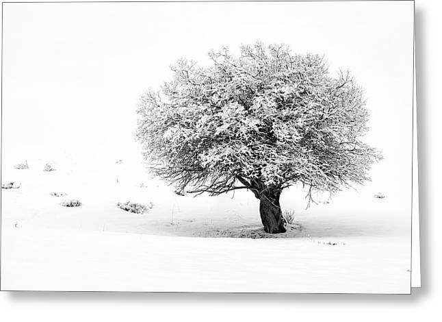 Tree On Snowy Slope Greeting Card