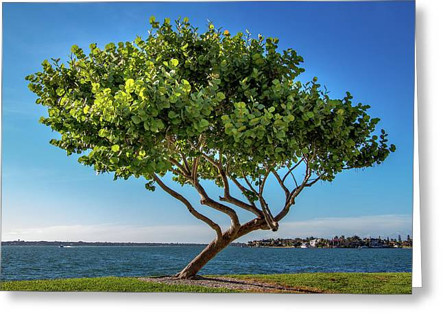 Tree On The Bay Greeting Card