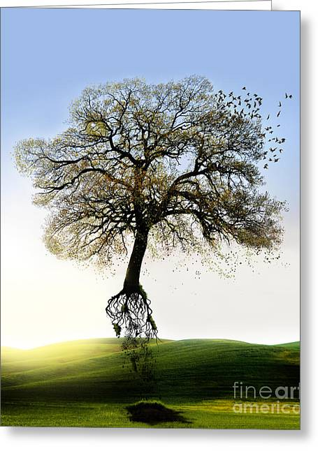 Tree On The Move Greeting Card