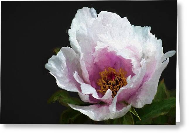 Tree Paeony I Greeting Card