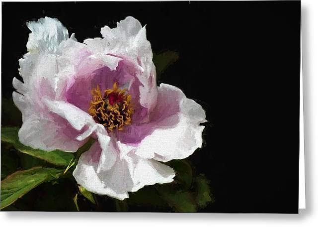 Tree Paeony II Greeting Card