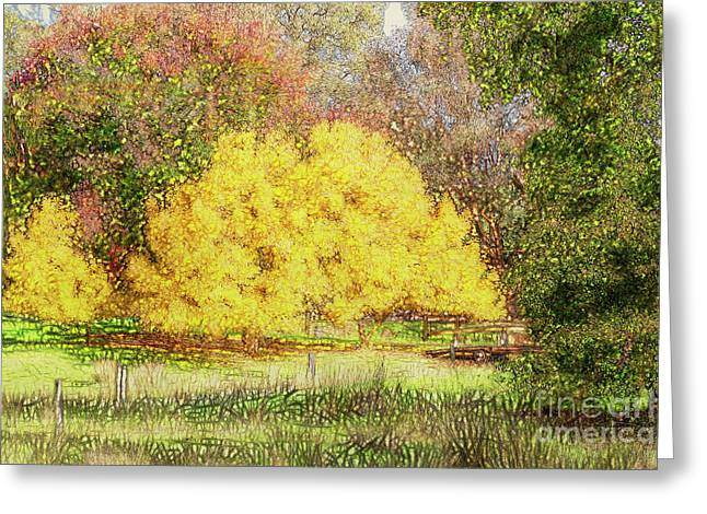 Tree Park Aglow Greeting Card by Elaine Teague