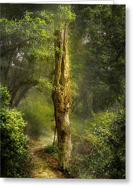 Tree Passing Greeting Card by Larry Jones