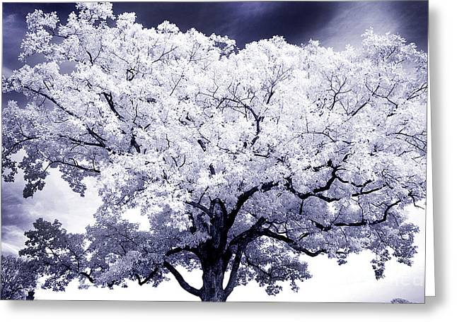 Greeting Card featuring the photograph Tree by Paul W Faust - Impressions of Light