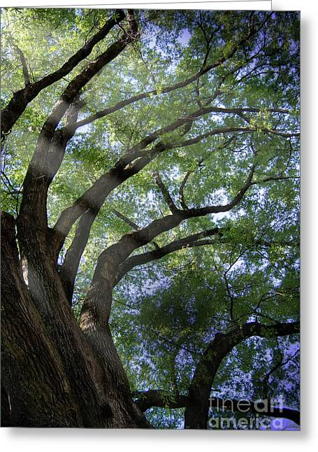 Greeting Card featuring the photograph Tree Rays by Brian Jones